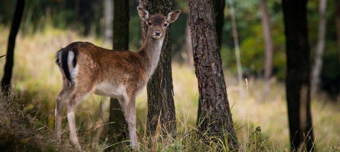 2017徒步第三期 – Rambouillet森林