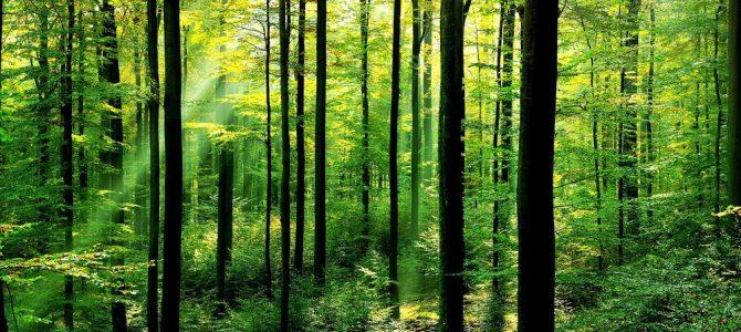 徒步活动第8期 – 枫丹白露森林之春