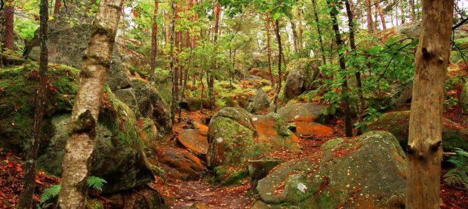徒步活动第18期 – 枫丹白露森林