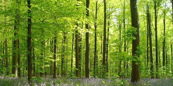徒步活动第21期 – 凡尔赛森林